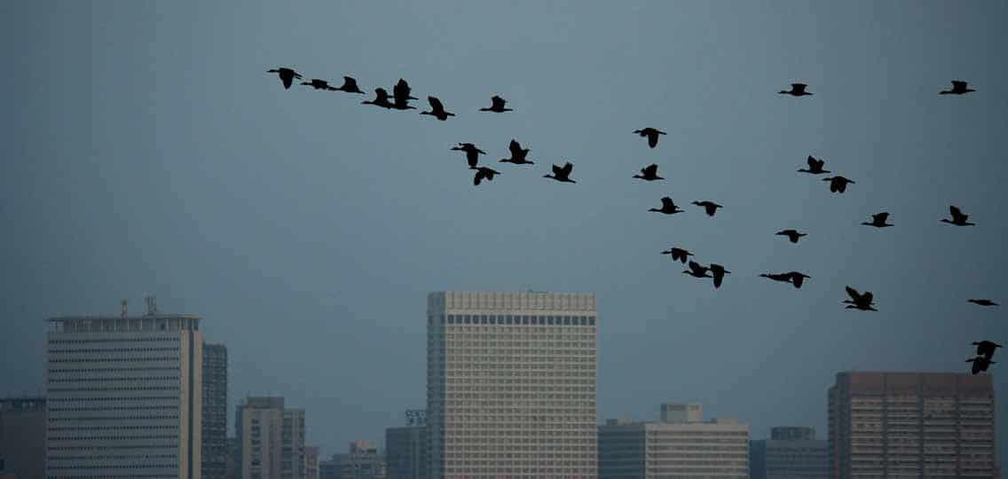 Birds flying in front of building