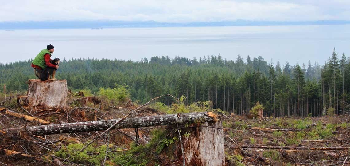 Clear cut Forest by Matt Smith