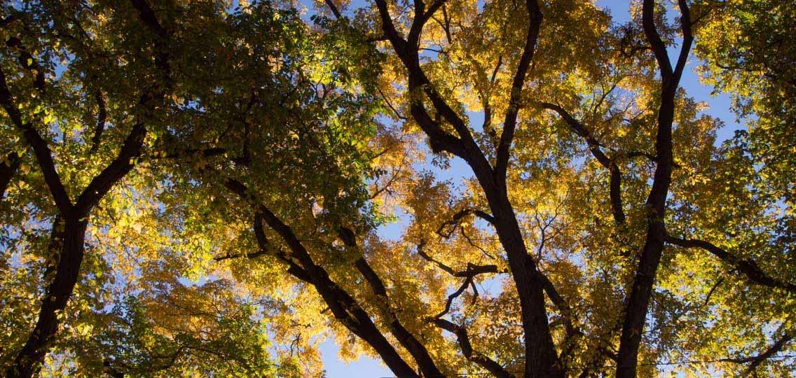 Fall trees in Saskatoon
