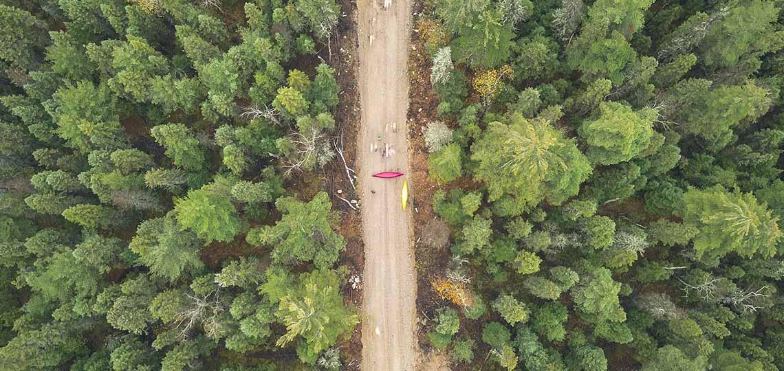 forestry plan